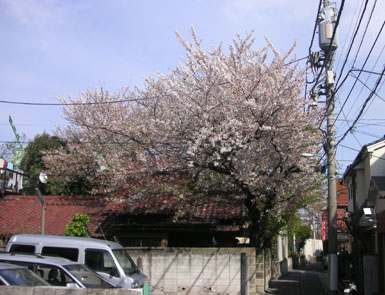 2006sakura